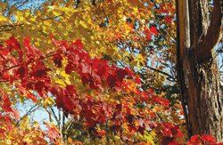 Scenic-Trees-083