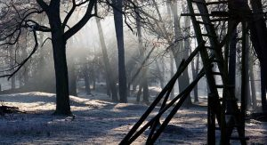forest-657903_1280