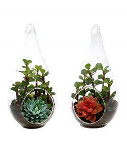 Terrariums Succulents 6