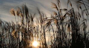 Bittersweet-Farm-Toledo-Nature
