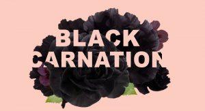 black-carnation