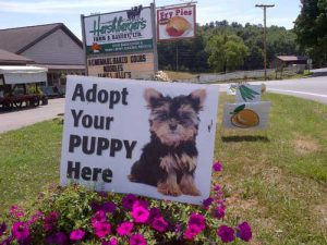 Photo Credit: thepuppymillproject.org