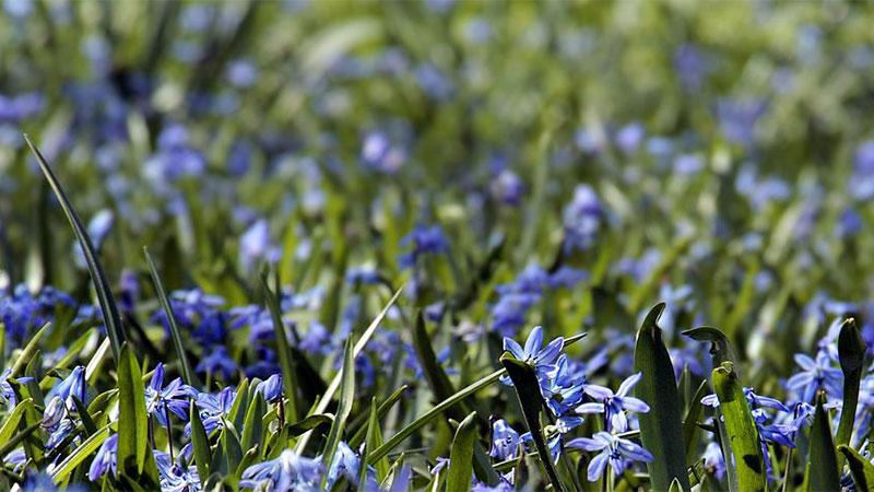 blue-flow