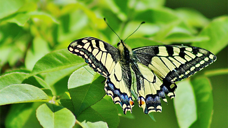 butterfly-3347090_1280