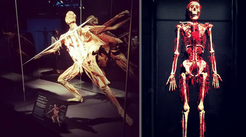 (Left) The Javelin Man, (Right) Circulatory System.