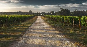 country-lane-428039_960_720