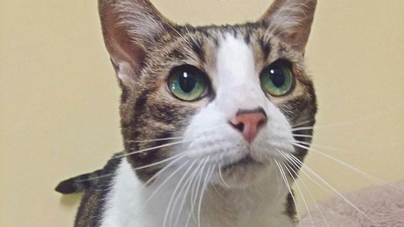 P_W---cat