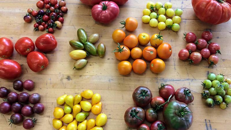 Poppers---Harvest-Market-Dinner-2