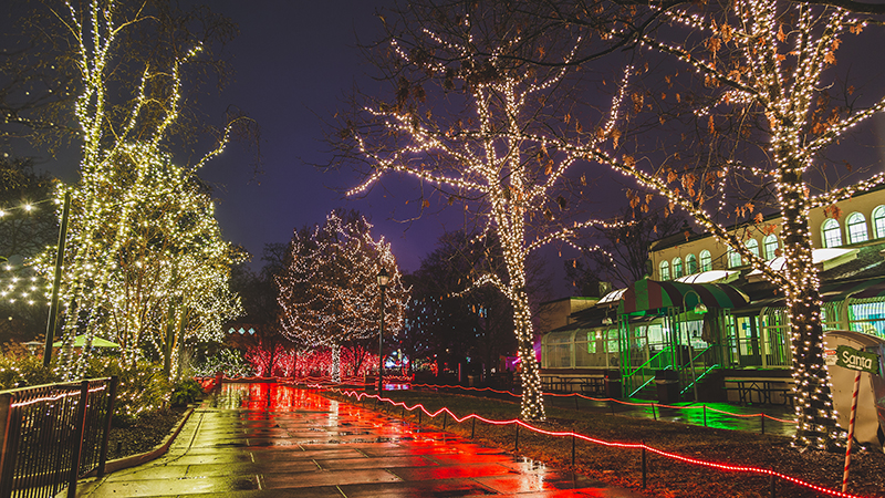 Lights Before Christmas began with a relatively small display of 60,000 lights in 1986. It has now grown to over one million lights being put up annually. Photo credit: Toledo Zoo.