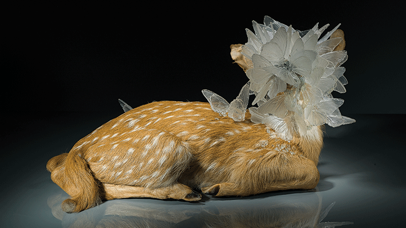 "Alli Hoag, ""Trace Decay,"" taxidermy fawn, cast glass, mixed media."