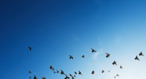 Image of birds flying free