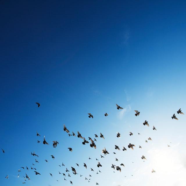 Image of birds flying free