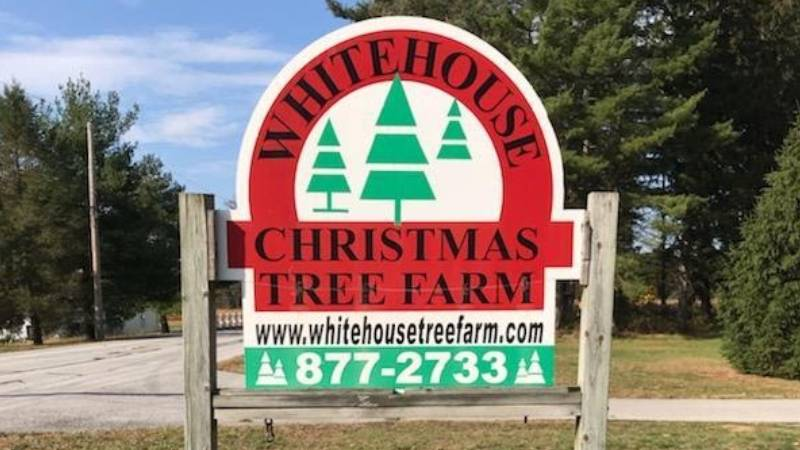 Oh Christmas Tree: Wheeler Farms Selling Trees Amid Pandemic